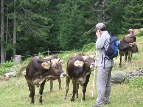 Austrian cows get the latest news on aerosols